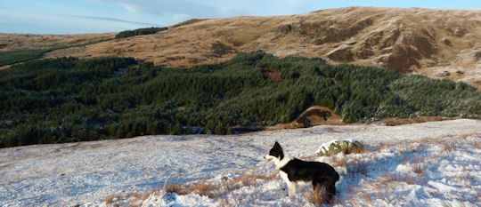 My only companion on many Scottish mountains