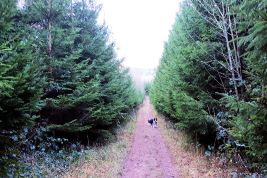 Christmas Trees near Burton Leonard