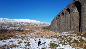 Ribblehead in the snow
