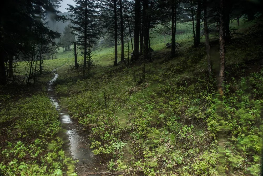 Wet Trails in the Yellowstone backcountry in June