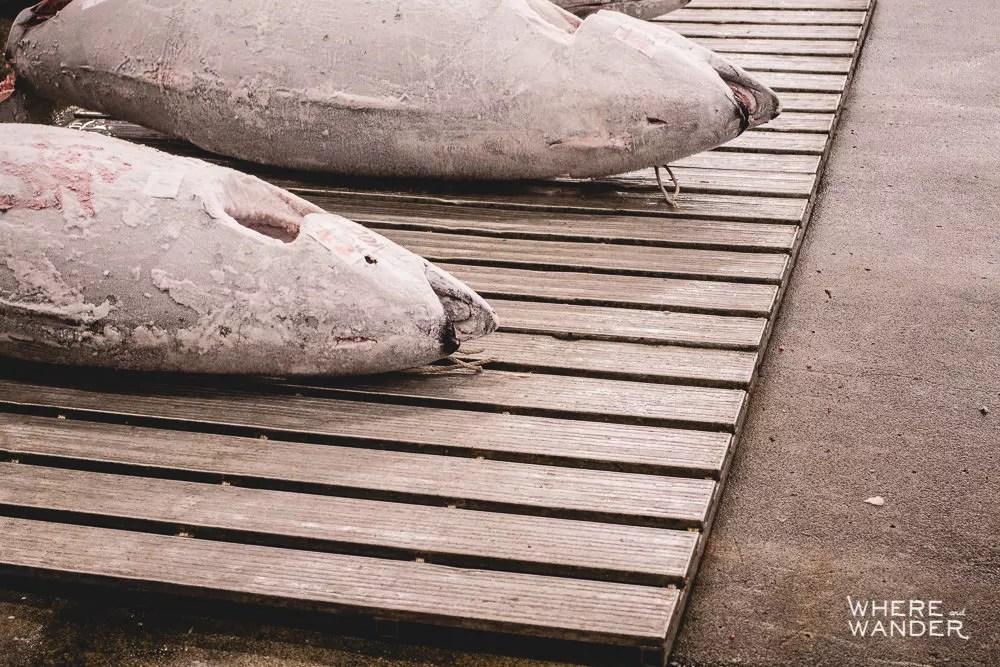 Frozen Tuna Purchased At Tsukiji Fish Market