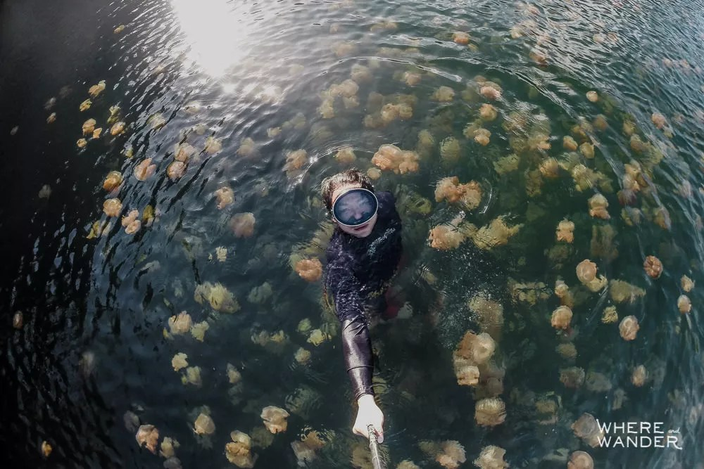Where To Swim With Jellyfish In Palau