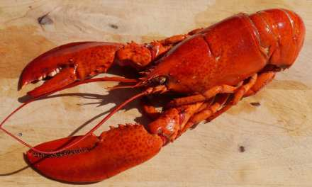 Cracked Lobster