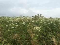 Perching Hill Wood
