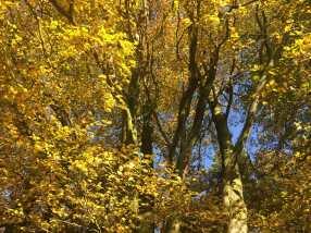 Ashridge-autumn-leaves