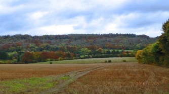 Grove Wood from Drayton Beauchamps