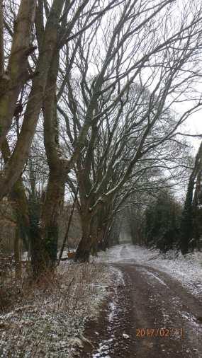 straights-plantation-swyncombe