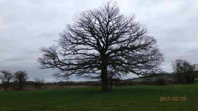 Skeleton-tree