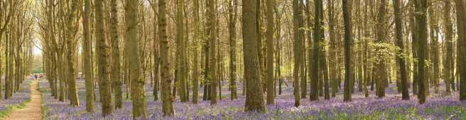 Dockey-Wood-panorama