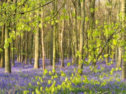Spring in Hertfordshire