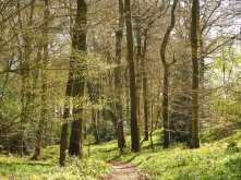 Long Copse, Highmoor