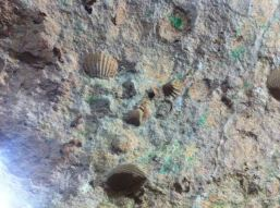 Shells embedded in the cave's ceiling