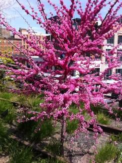 Spring Flowers on the HighLine