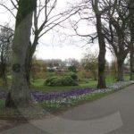 Bitts Park Crocus Walk, Carlisle