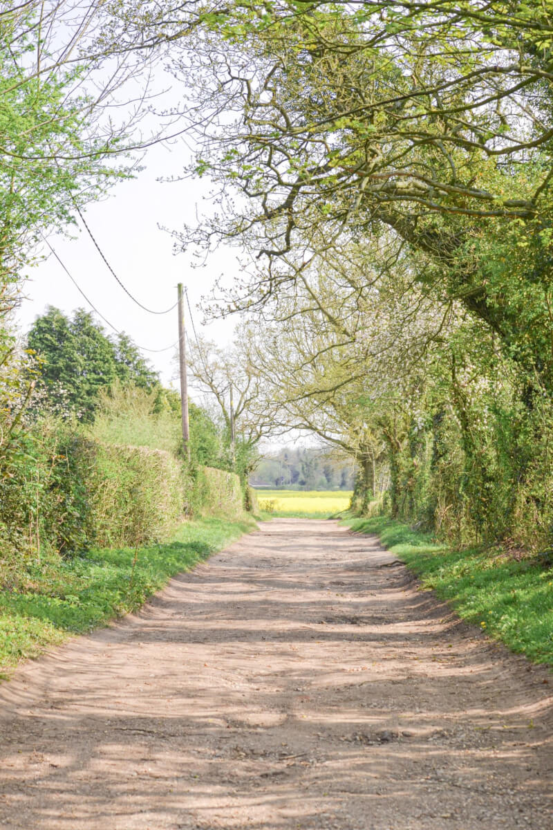 image of a lane in spring