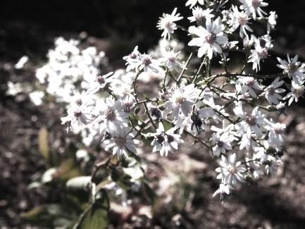 Central Park, Flowers