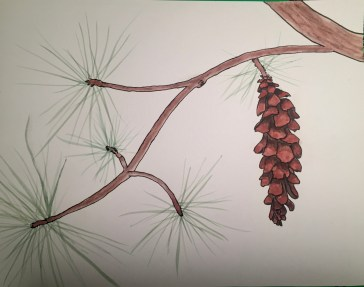 watercolored pine tree branch outlined in ink
