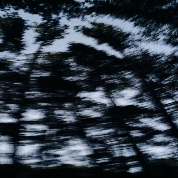 Tree Silhouettes moving