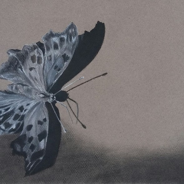 Charcoal Butterfly on E-Portfolio