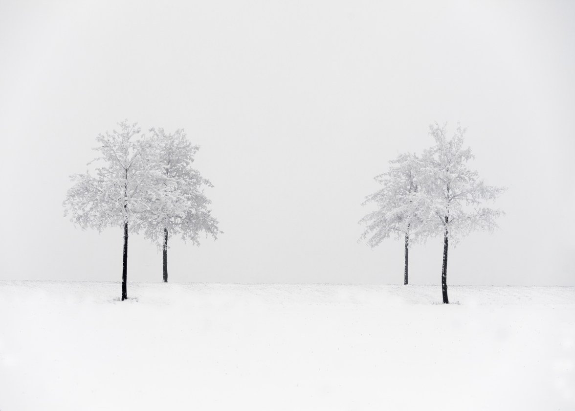 trees in minimal winter landscape