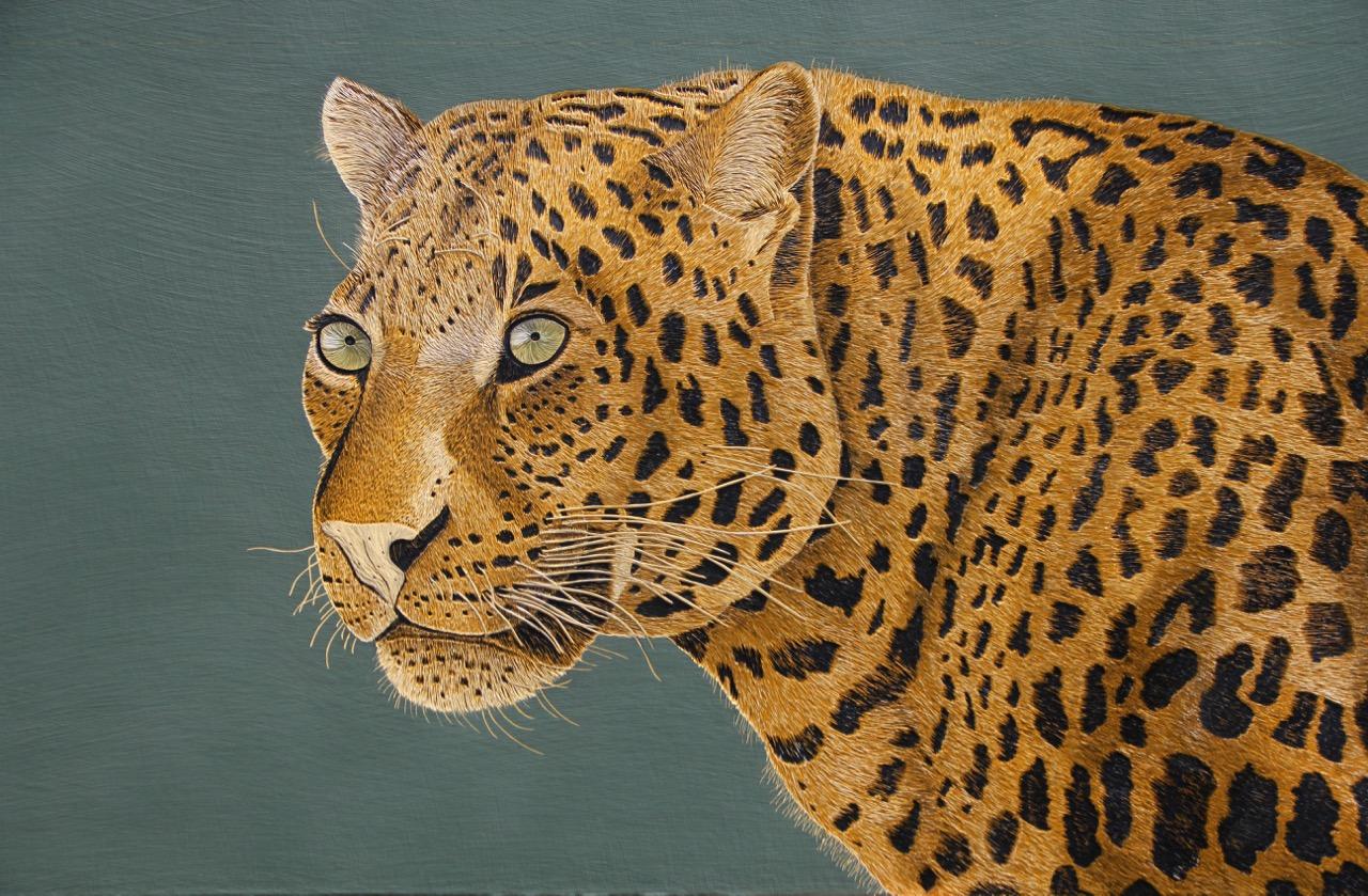 DISPLACED - Leopard, Hannah Jensen