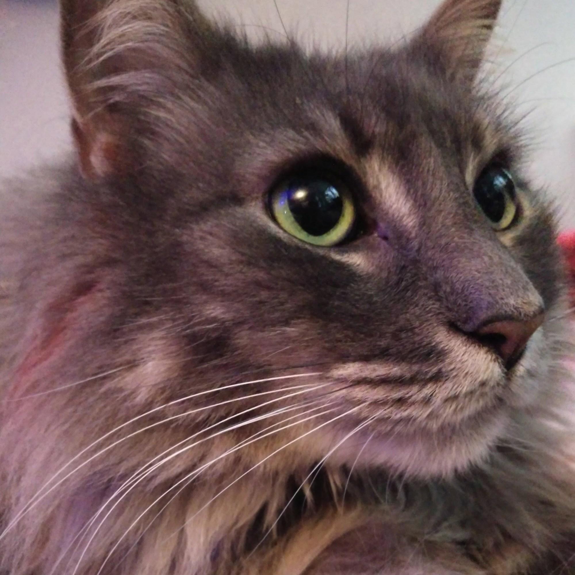 Tumnus Moran Cat Frank