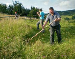 Learn to scythe hay