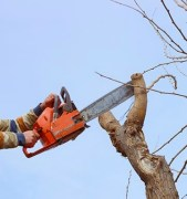TREE TRIMMER ZINGER_Where Excuses Go to Die