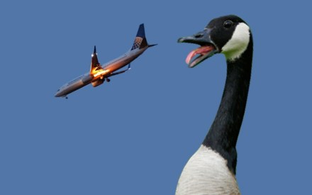 Cosmetic Surgery Bird-Strike_Where Excuses Go to Die