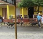 Strays in Viñales_Where Excuses Go to Die7