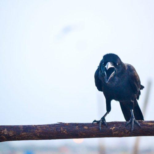 Black bird on branch Florida Rehab