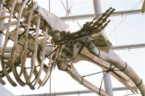 LA Natural History Museum