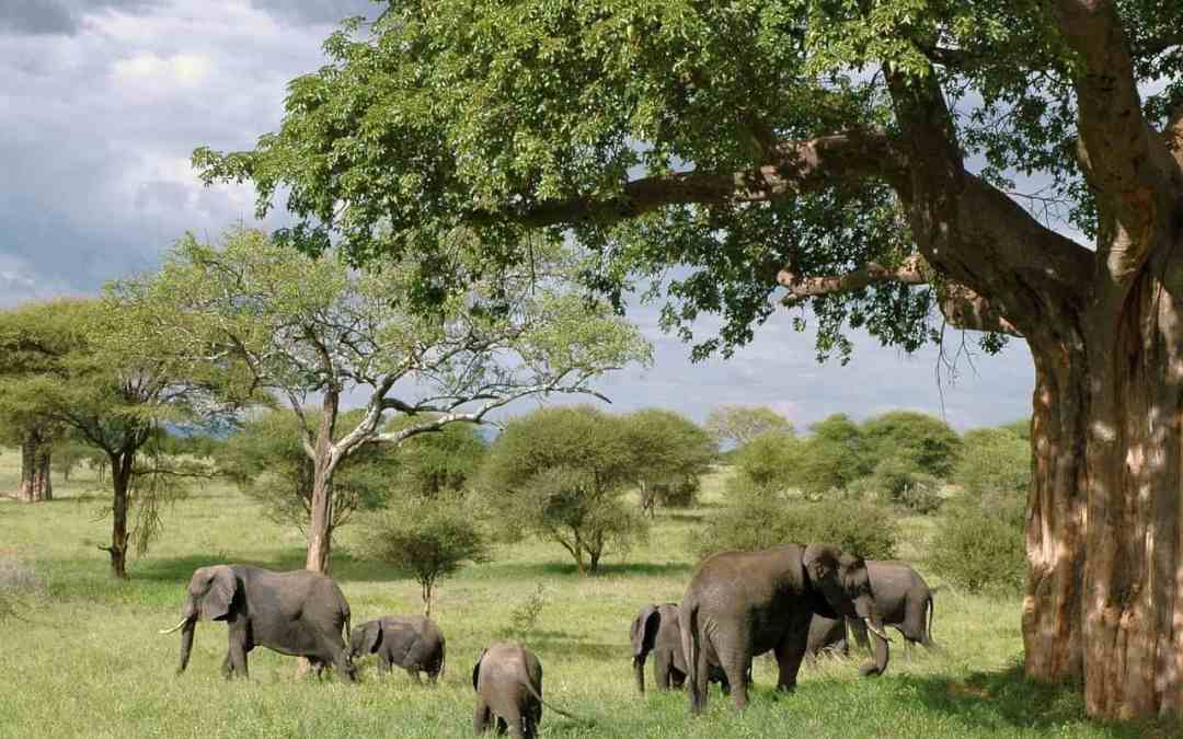 Best Safari Parks In Tanzania