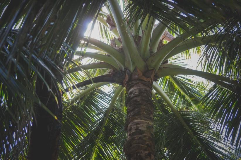 12-12-01-oahu-hawaii-00287.jpg