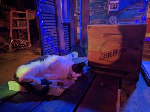 Blue Moon Saloon, the security at the entrance