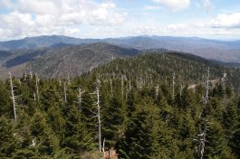View from Clingsman Dome
