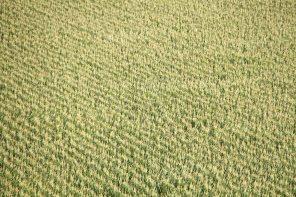 Farmlands around