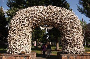 Elk antlers (bulls shed their antlers each year)