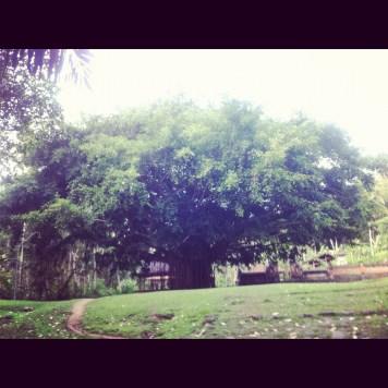 duże drzewko
