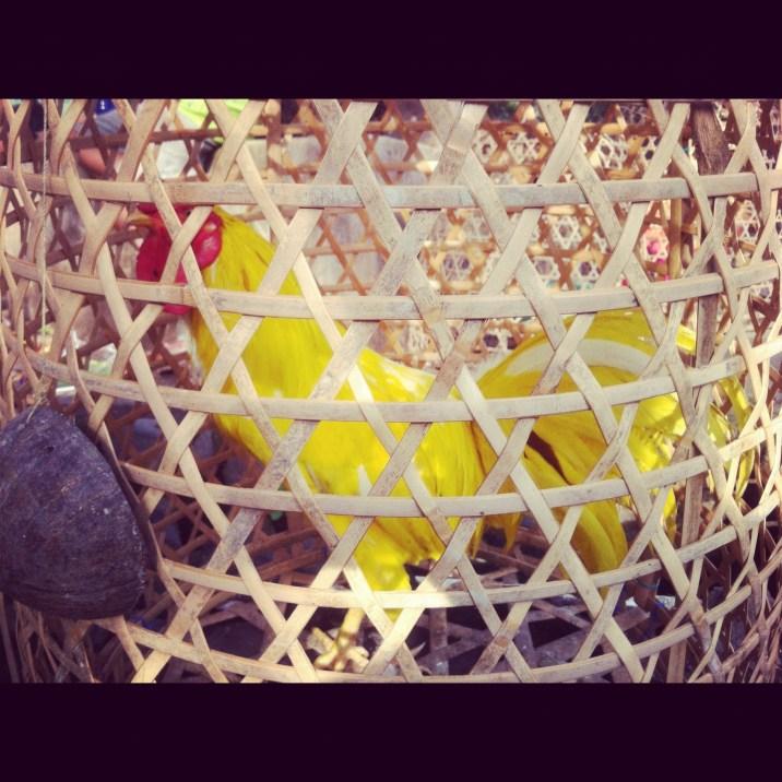 farbowany na żółto