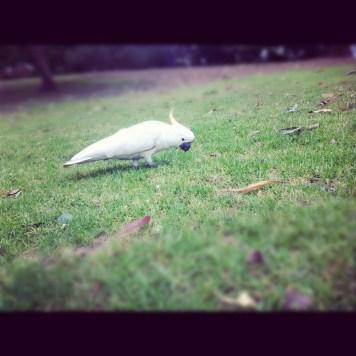 spotkana w parku