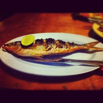 ryba - trucizna