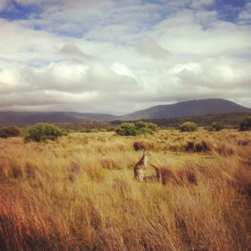kangurolandia