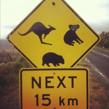 kangury, koale, wombaty...