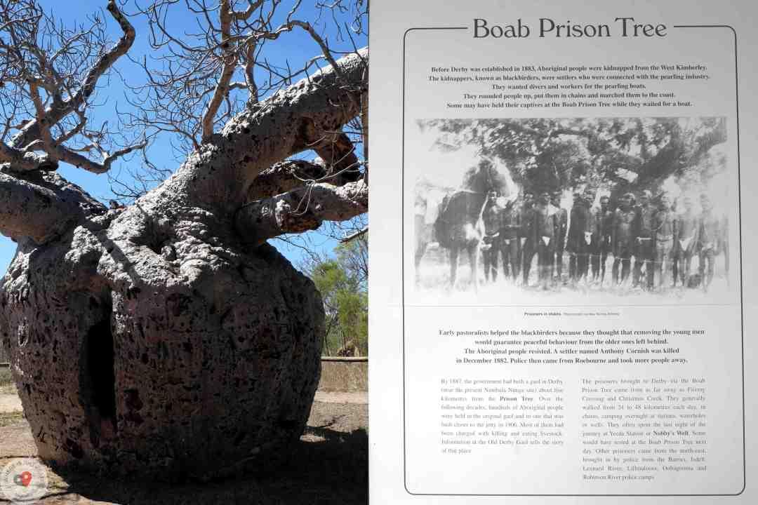 Baobab Prison Tree 14.08