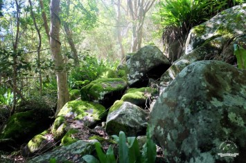 lasy Whitsunday Island