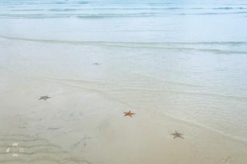 Moreton Island rozgwiazdy