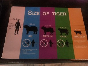 Leaflet_Size of tigers