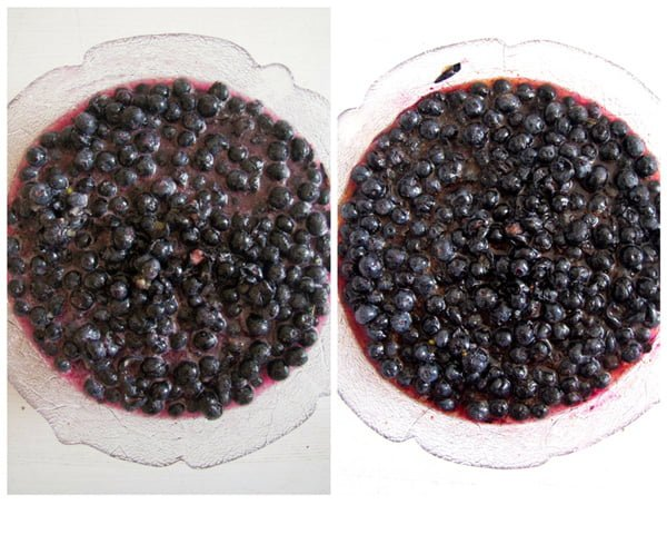 how to make blueberry sauce Homemade Blueberry Sauce   How to Preserve Blueberries