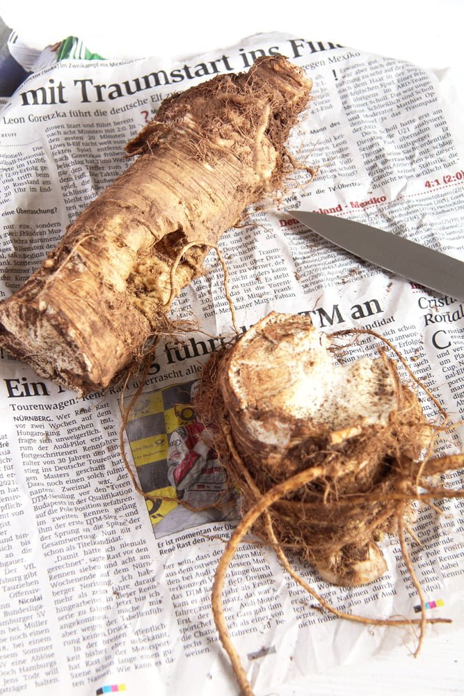 horseradish root How to Make Preserved Horseradish in Vinegar